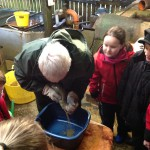 Getting eggs from the hen fish