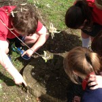 Active Learning - Topic of trees