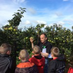 P5-7 trip to see maths in action at a local orchard